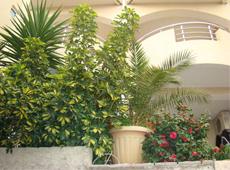 Живые цветы украшают апарт-отель Барон