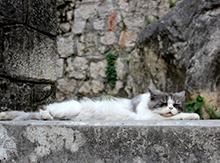 Совсем не трудно встретить кота на этих узеньких улочках!