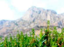 Контраст пейзажа: яркие травы и строгие горы