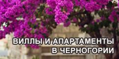 Аренда вилл и апартаментов в Черногории
